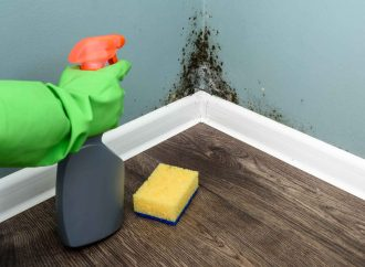 How to Deal With Mold in Your House?